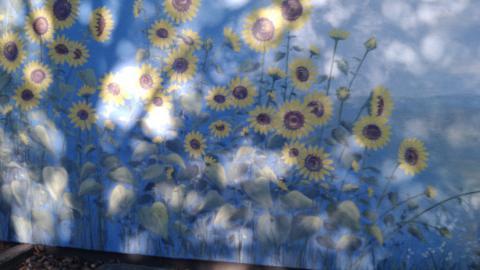 Sonnenblumen, Sockel, Hochhaus, Wuppertal, Atelier Allgaier